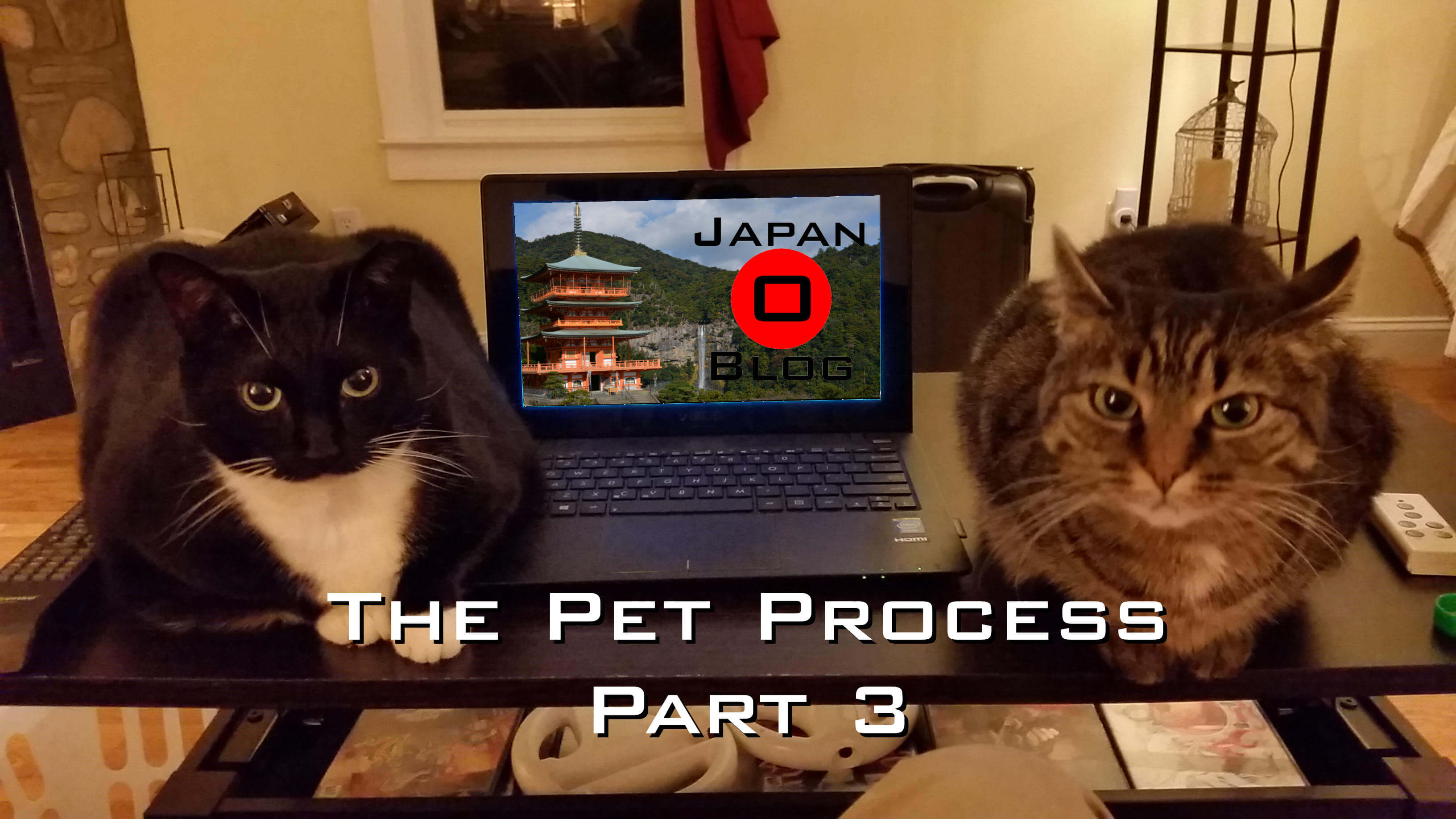 Pet Process Part 3
